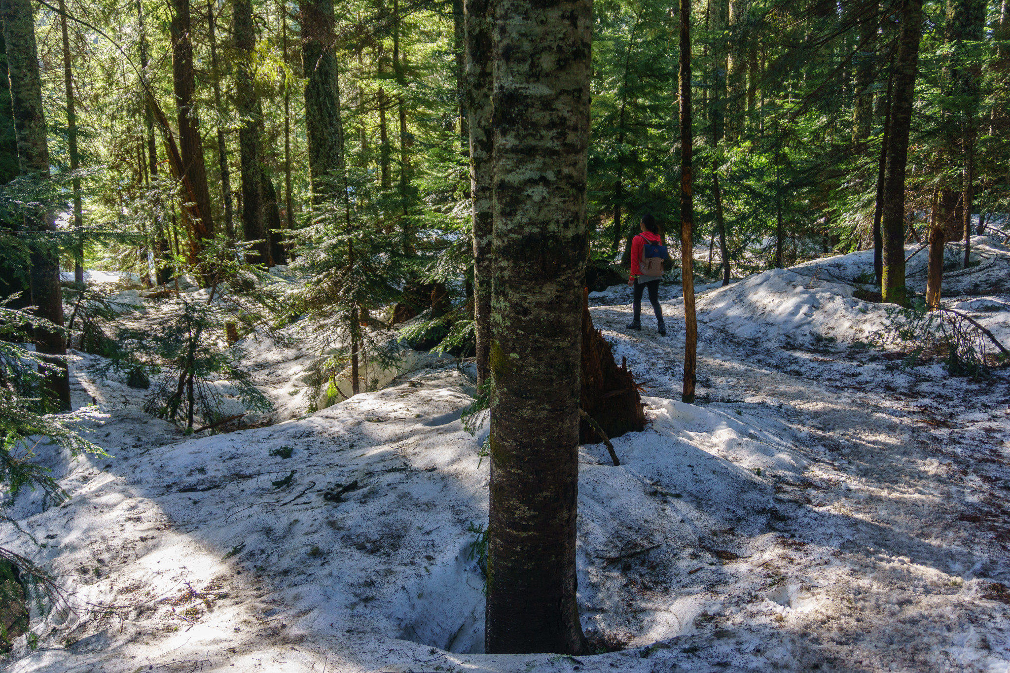 Howe sound trail