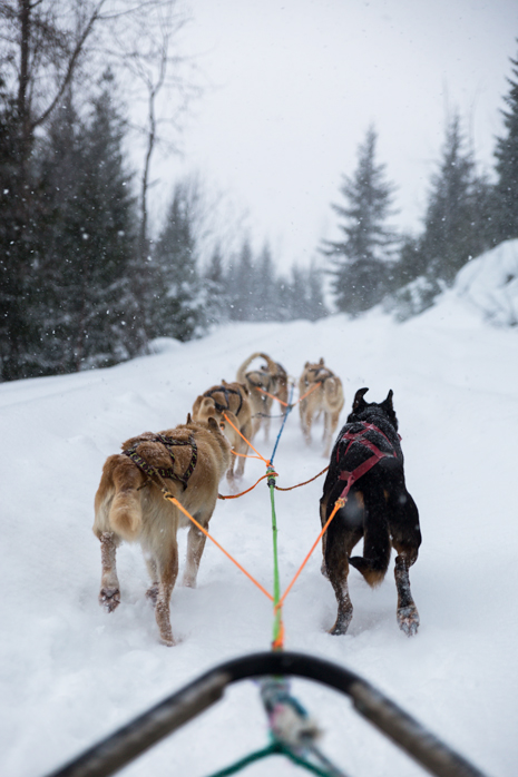Revelstoke dog sledding