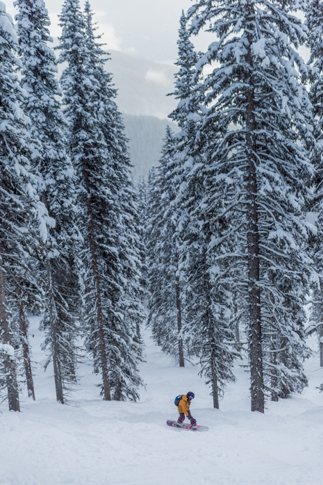 Revelstoke Tree Run skiing