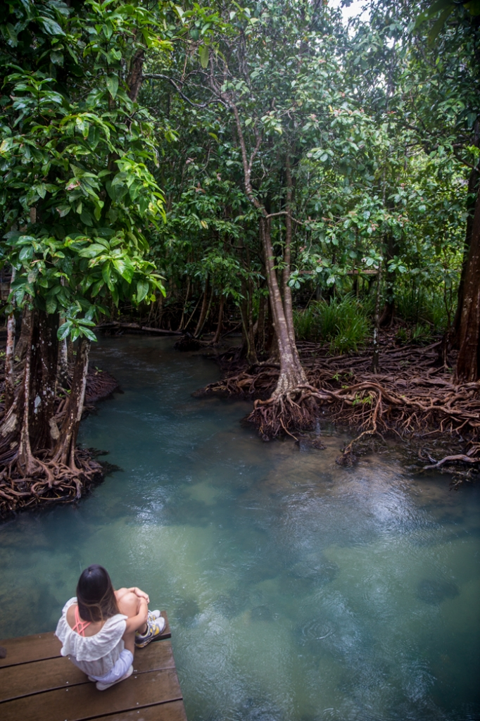 Krabi mangrove boardwalk